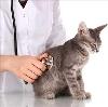 Ветеринарные клиники в Уйском